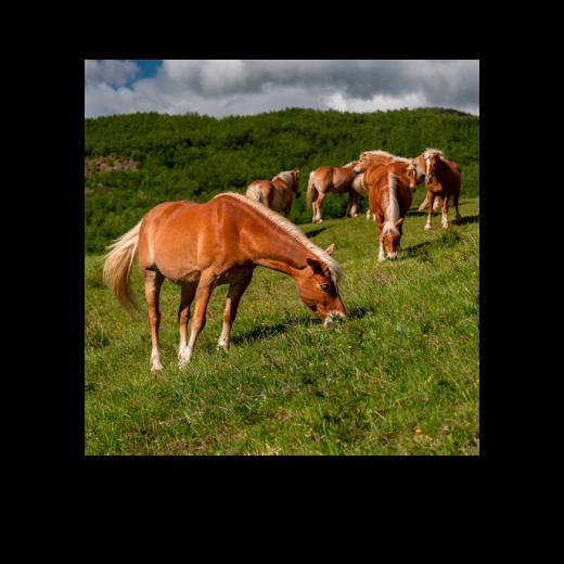 Slider2_escursioni-a-cavallo