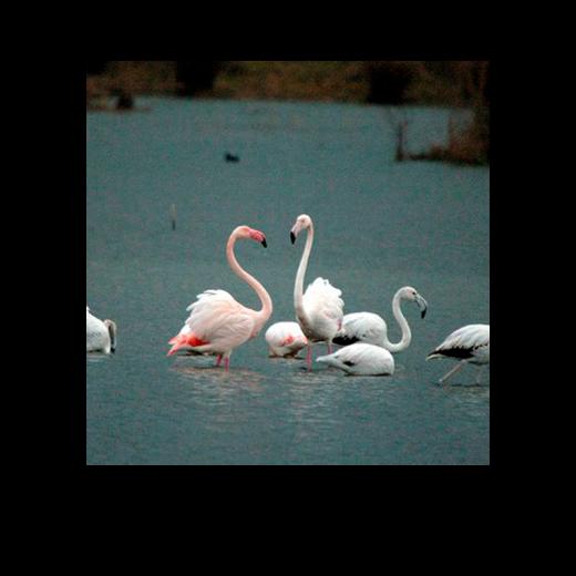 Slider2_oasi-WWF
